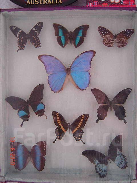Продам коллекцию элитных и редких бабочек.