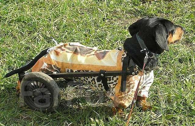 Как сделать инвалидную коляску для собаки своими руками