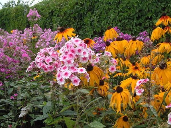 Многолетники - Сад и огород