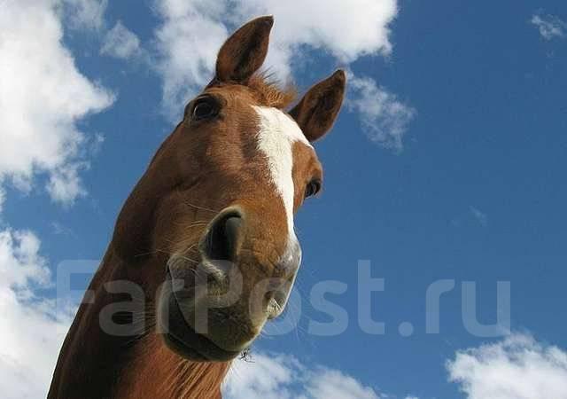 Акция! Конные прогулки - 2 часа по цене одного!. Акция длится до 28 февраля