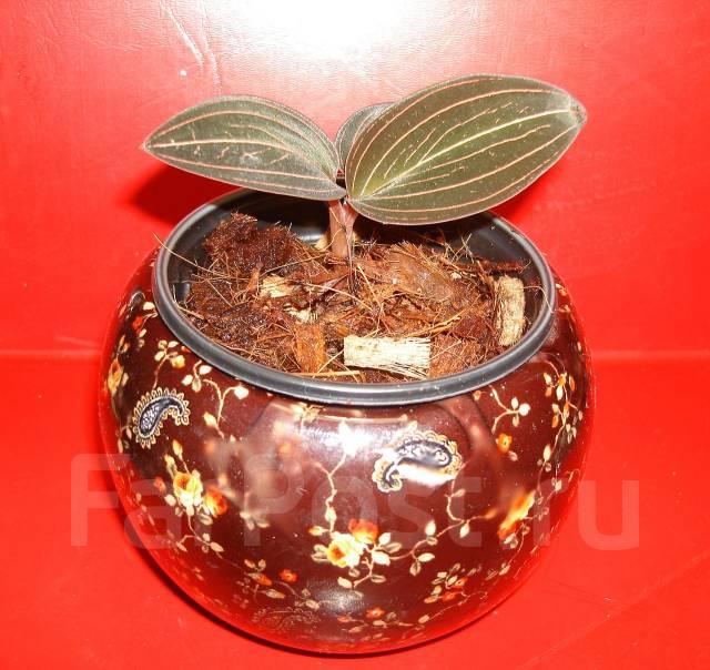 Листья, корни... Главное - цветок! 1319148901380_bulletin