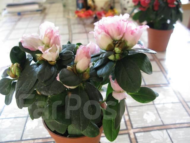 Красивые комнатные цветы дёшево