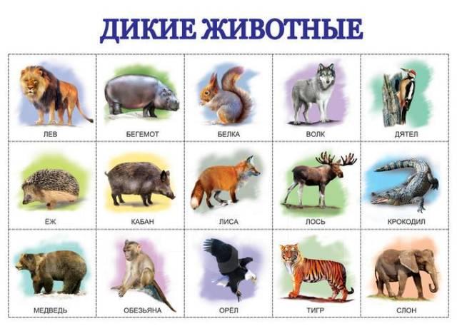 Дикие животные во владивостоке
