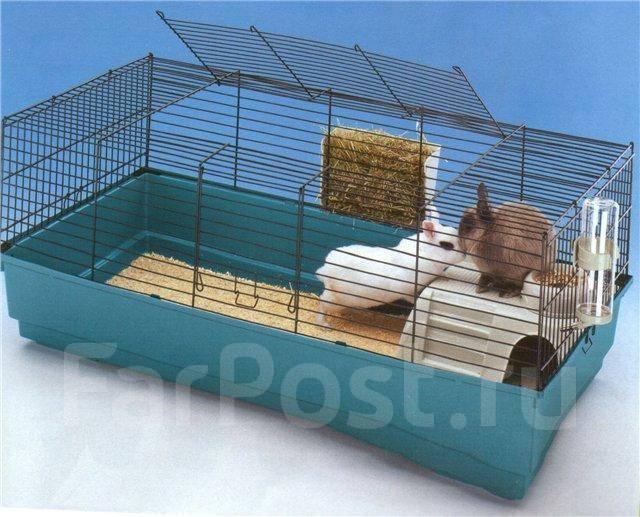 фото клітки для морських свинок