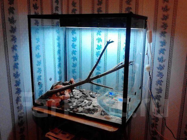 Террариум со змеями - Другие животные во Владивостоке