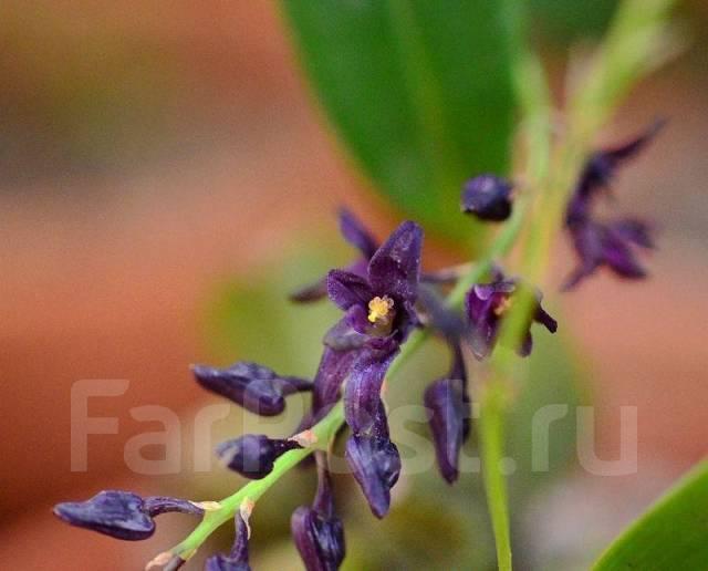 Виды орхидей. Классификация групп орхидных - Комнатные 1