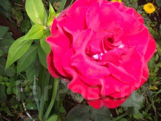 Многолетние цветы для вашего сада