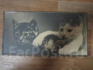 """Фотокартина """"Котята"""" 1977 года."""
