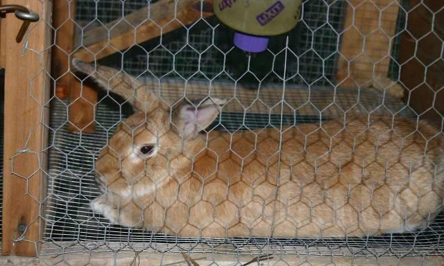 Разведение уход за кроликами в домашних условиях