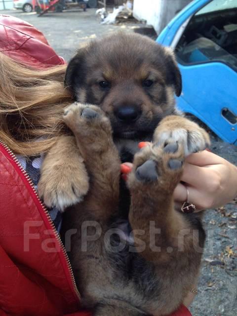 возникают далеко фарпост владивосток животные собаки дамы Цены продажу