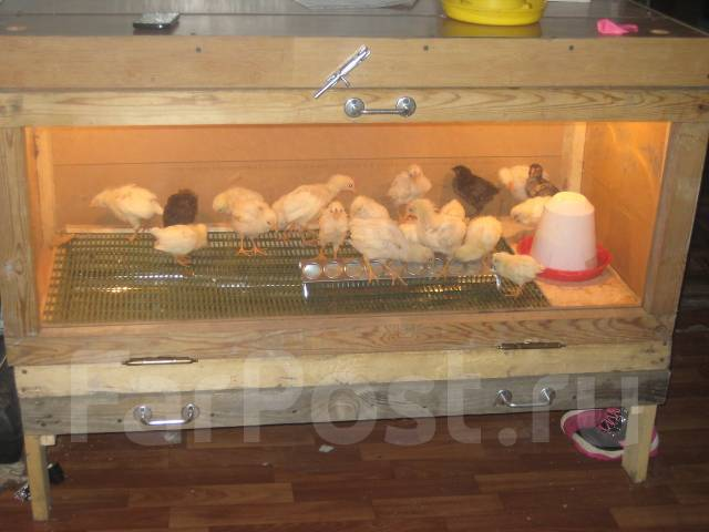 Брудер для цыплят из поликарбоната