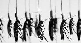 Уничтожение тараканов, клопов. Дезинфекция, дератизация. Гарантия.