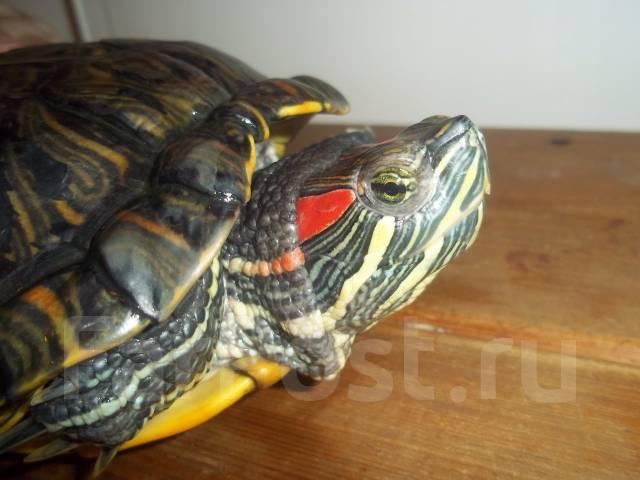 Рептилии хабаровск