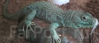 Обогревочный камень для рептилий