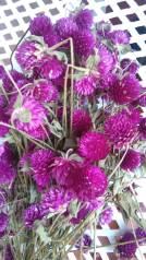 Сухоцветы для декора и творчества