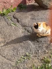 Отдам бесплатно котят . 2-3 месяца. Малыши ищют себе дом