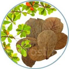 Продам листья индийского миндаля (для аквариума)