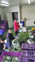 Рабочий. Срочно Чистка лука , салат, в Ю. Корее . И.П.Им. Улица Карла Маркса 21в