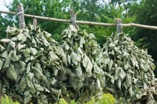 Продам веники банные дубовые