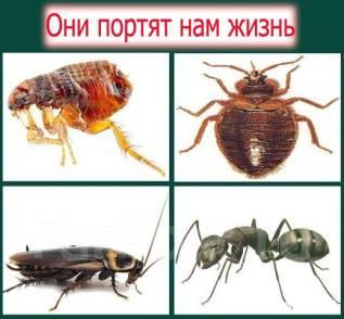 Профессиональное уничтожение насекомых (тараканов клопов блох)Гарантия