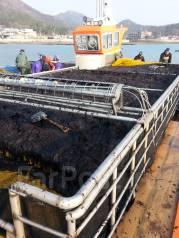 Рабочий. Добыча морской капусты в Корее. И.П.ИМ. Администрати