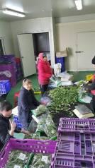 Рабочий. Сбор,чистка лука порей и салата.в Ю-Корее. И.П.Им. Ю-Корея