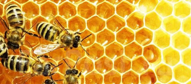 Мед. Под заказ