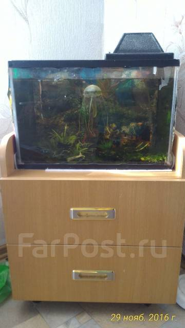 Рыбки аквариумом 30 литров