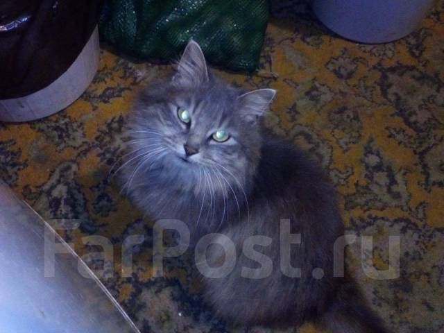 Кошка Дымка ищет дом!
