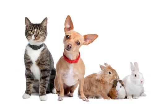 Услуги ветеринаров.