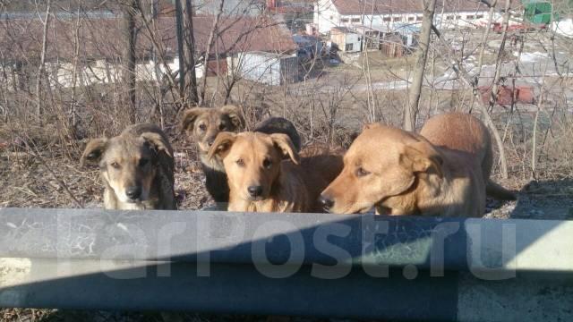 Ищем собаку с щенками с Выселковой в добрые руки. Под заказ