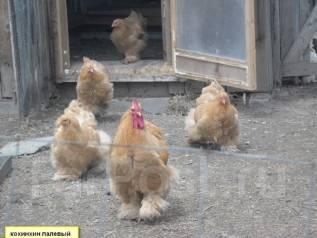 Яйцо инкубационное породной птицы. Под заказ