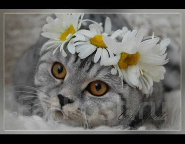 Передержка кошки 200р