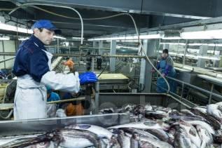 Рыбообработчик. Рыбообработчики. ООО ПКФ «Южно-Курильский рыбокомбинат». Курилы