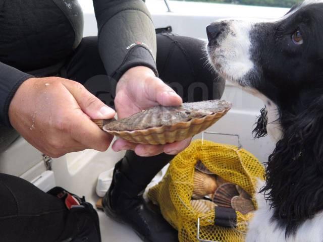 Морские прогулки, рыбалка, доставка на острова. 15 человек, 50км/ч