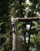 Спил деревьев любой сложности. Вывоз веток. Выкорчевка пней.