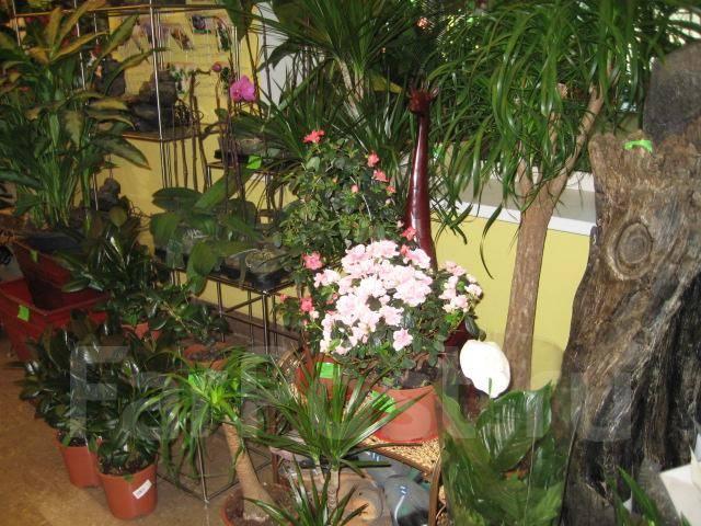 Для ландшафта и зимних садов. *Дискаунтер Цветов*
