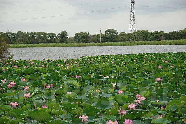 Продается земельный участок с озером. 140 000 кв.м., собственность, электричество, вода, от частного лица (собственник). Фото участка