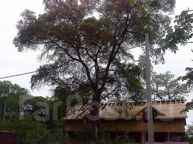 Спилю деревья, методом промышленного альпинизма. Все высотные работы