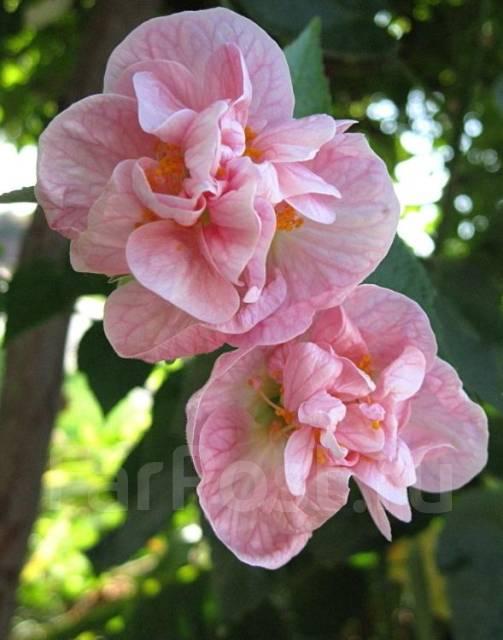 Похожие на фиалку цветы 81