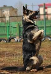 Дрессировка собак всех возрастов с/без родословной