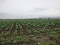 Земельный участок 10 гектар от собственника. 100 000кв.м., собственность. Фото участка