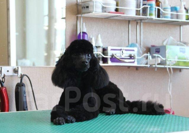 Профессиональный Груминг собак. Р-н Баляева. Опыт более 15 лет.