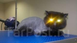 Стрижка кошек и котов без наркоза 1300р.