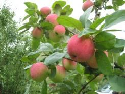 Плодовые, ягодные растения.