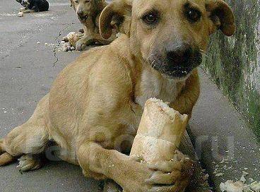 Ярмарки: радость от покупки - вам, денежка для лечения - животным.
