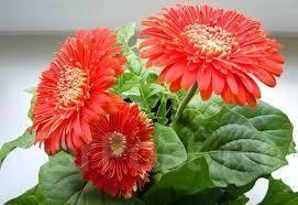 Растения и цветы. Под заказ