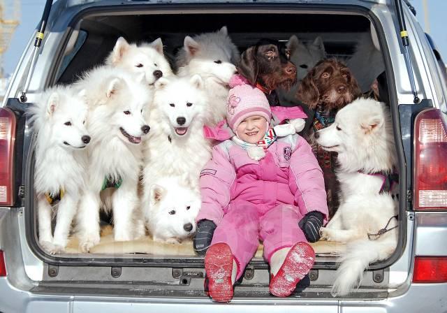 самоедская лайка фото цена щенки