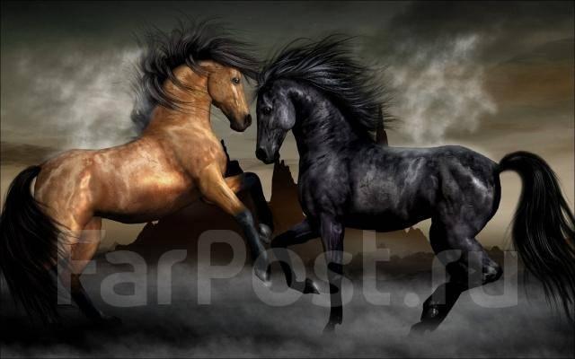 Ночная конная прогулка. При луне романтика безгранична.