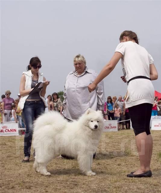 Дрессировка собак и коррекция поведения